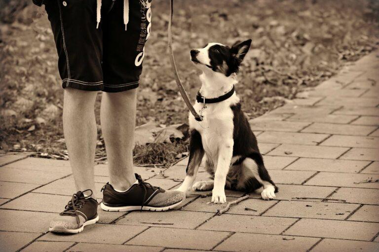 dog, animal, pet