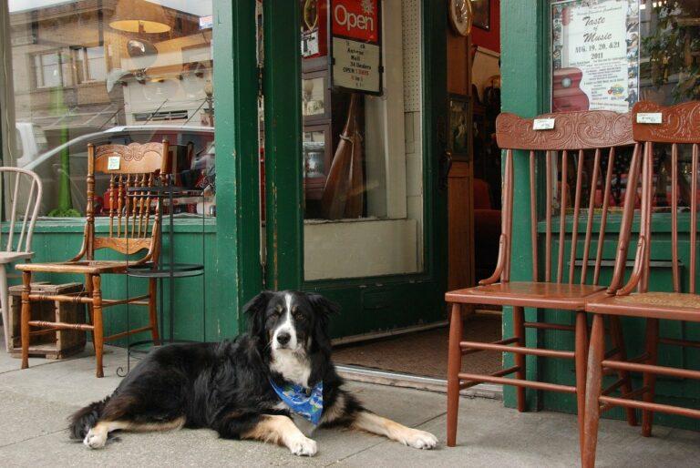 dog, pet, shop