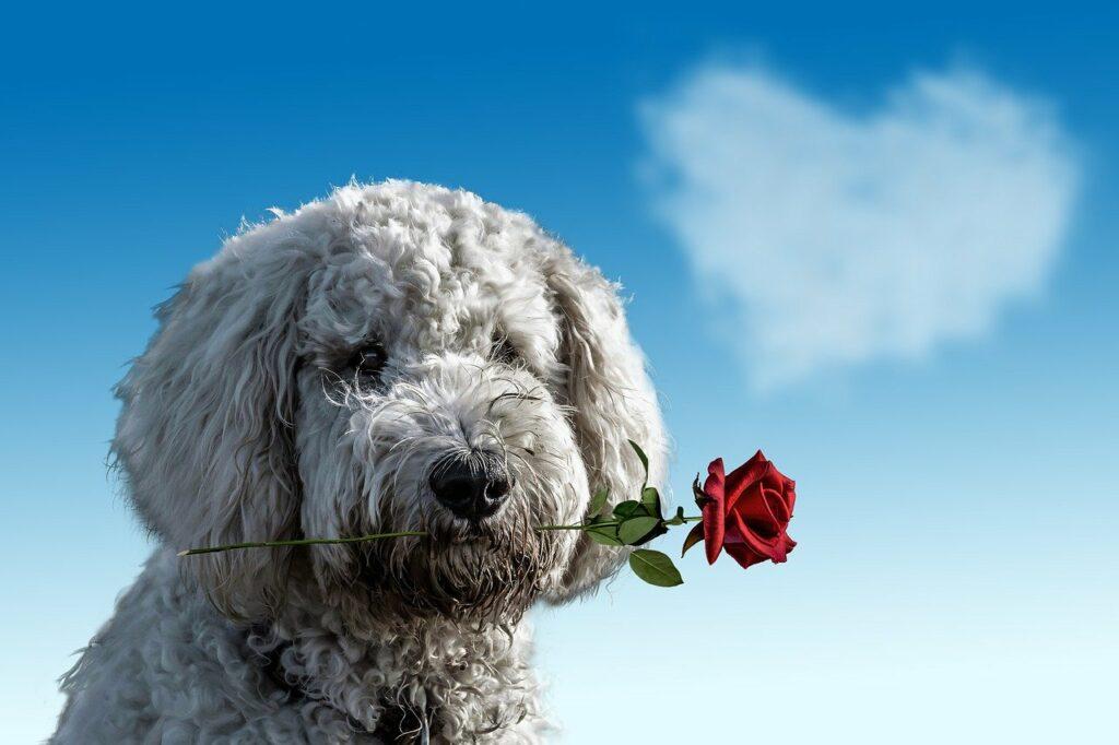valentine's day, dog, animal