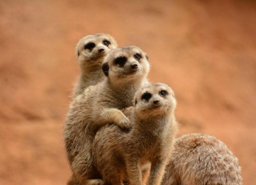 animal cute fur zoo
